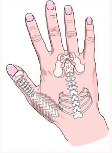 Hand Utsida Skelett
